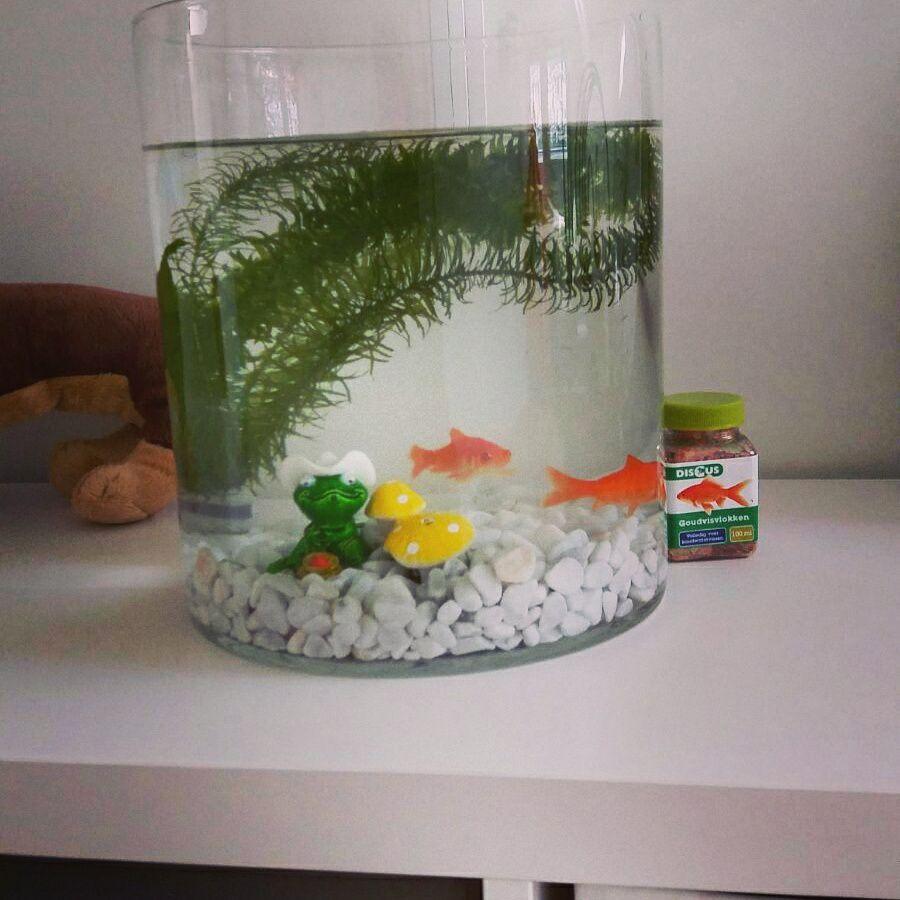 De vissen van Fontana